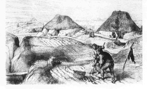 Potato plots and cabins, Co. Roscommon (Illustrated London News)